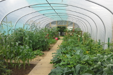 Jim McColl of BBC TV Beechgrove Garden fame opened the polytunnel